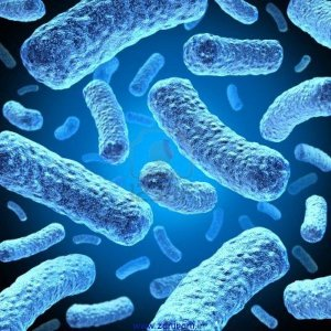 bacteria-and-bacterium