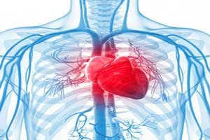 interesting-facts-about-the-human-heart